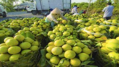 Chuỗi cung ứng lạnh – mắt xích quan trọng thúc đẩy xuất khẩu nông sản Việt Nam